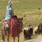 Iran Nomads Migration