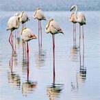 Gavkhuni Wetland - Iran desert tour
