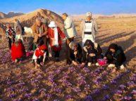 iran-saffron-tour