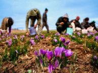iran-saffron-tour-package
