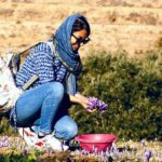 iranian-saffron-tour