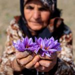 iranian saffron tour package