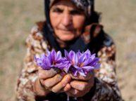 iranian saffron tour package