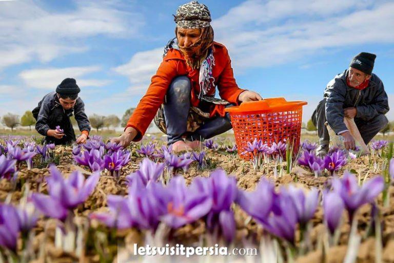 saffron tour by letsvisitpersia
