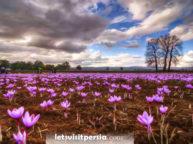 saffron tour in kashan