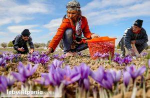 Iran Saffron Tour