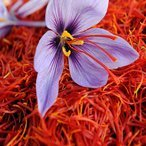 Iran Saffron farm tour